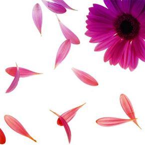 Bild för kategori Botanical extracts
